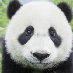 大熊猫Jewelry
